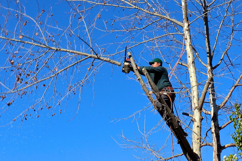 Why it is important to Prune Trees