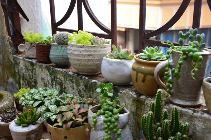 Creative Ways To Use Indoor Plants for Your Home Decor