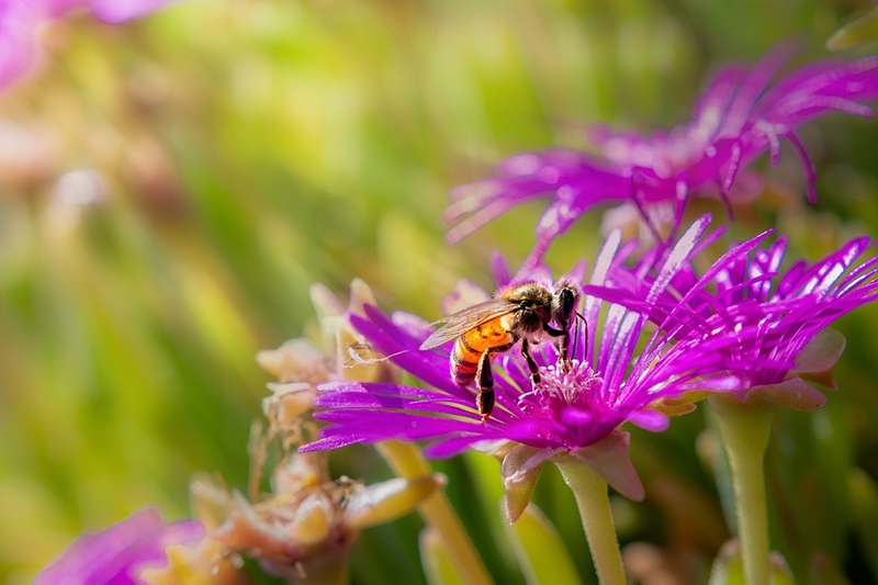 How to Get Bees to Pollinate Your Vegetable Garden